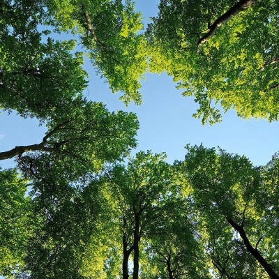 photos_forest_nature_trees_leaves_sky_ultra_3840x2160_hd-wallpaper-99865